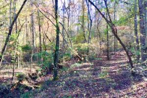 Harris County Hunting Property with Lake  in Harris, GA (22 of 27)