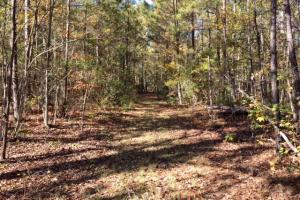 Harris County Hunting Property with Lake  in Harris, GA (6 of 27)