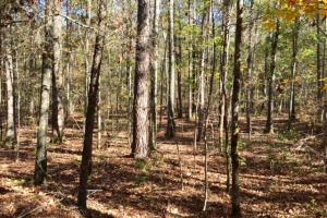 Harris County Hunting Property with Lake  in Harris, GA (8 of 27)