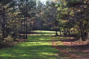 Sipsey Recreation and Timber Tract - Tuscaloosa County AL