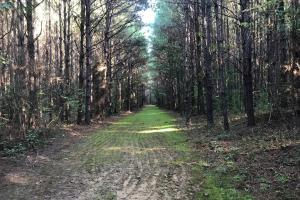 Akron Timber Investment & Hunting - Hale County AL