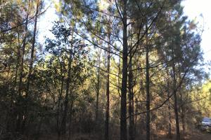 Cowpens Creek Forest Homesite - Washington County AL