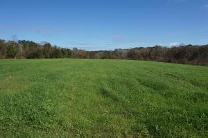 Burnam Branch Hunting Opportunity - Sumter County AL