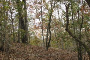Richland Hunting and Timber Tract - Stewart County GA