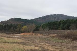516+/- Acres Timberland Adjacent to Ouachita National Forest - Montgomery County AR