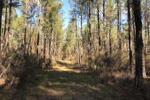Calamus Pond Homesites - Berkeley County SC