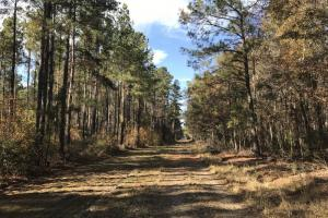 Calamus Pond 15 acres - Berkeley County SC