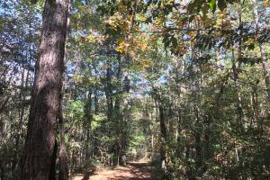 Black Creek Recreation & Residential Tract - Lamar County MS