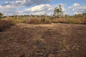 Holladay Recreational Hunting Land  - Clarendon County SC