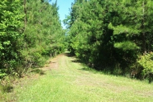 National Forest Recreational Homesite - Berkeley County SC