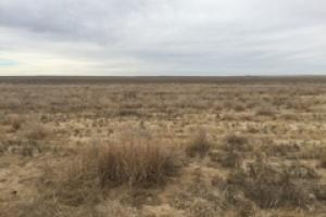 Kiowa County Dry Land Farm Ground For Sale - Kiowa County CO