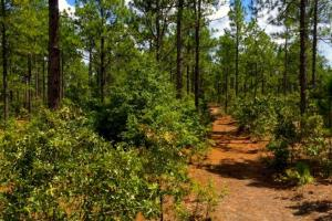 Accessible US-1 Commercial Acreage in Kershaw, SC (2 of 10)