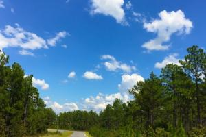 Accessible US-1 Commercial Acreage in Kershaw, SC (6 of 10)