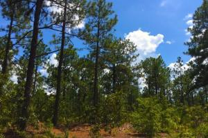 Accessible US-1 Commercial Acreage in Kershaw, SC (7 of 10)