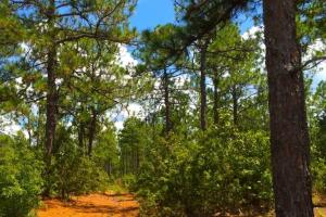 Accessible US-1 Commercial Acreage in Kershaw, SC (8 of 10)