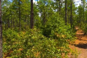 Accessible US-1 Commercial Acreage in Kershaw, SC (9 of 10)