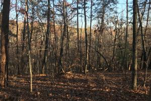 Mountain Homesite  - Greenville County SC
