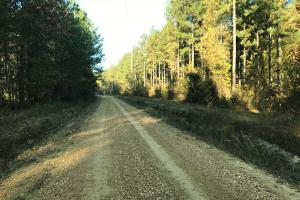 Bodka Valley Road Timber Investment - Kemper County MS