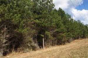 Hwy 29 Possible Residential Property in Perry, MS (5 of 5)