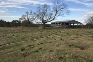 Rolling Hills Cattle Farm - Jefferson Davis County MS
