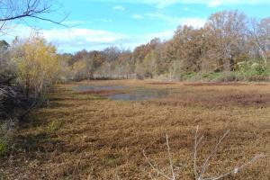 147+/- Acres Farm and Duck Hunting Land - Chicot County AR