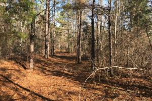 Browning Road Homesite - Tuscaloosa County AL
