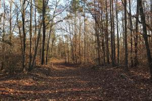 Savannah River Recreational Tract - Anderson County SC