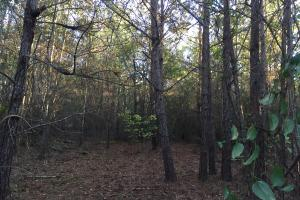 Springvale Road Recreation and Hunting with Homesite in Kershaw, SC (9 of 18)