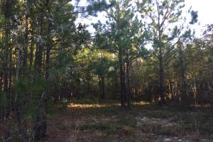 Springvale Road Recreation and Hunting with Homesite in Kershaw, SC (15 of 18)