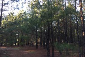Springvale Road Recreation and Hunting with Homesite - Kershaw County SC