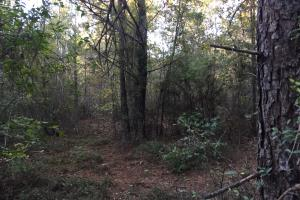 Springvale Road Recreation and Hunting with Homesite in Kershaw, SC (17 of 18)