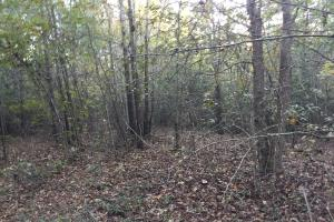 Springvale Road Recreation and Hunting with Homesite in Kershaw, SC (3 of 18)