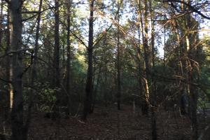 Springvale Road Recreation and Hunting with Homesite in Kershaw, SC (6 of 18)