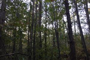 Springvale Road Recreation and Hunting with Homesite in Kershaw, SC (13 of 18)