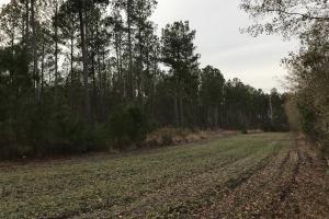 Moselle Recreational & Timber Investment - Colleton County SC