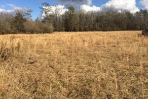 Hwy 17 Reform Homesite Tract A - Pickens County AL