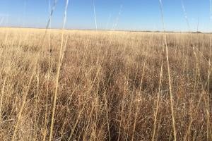 Eastern Colorado CRP For Sale