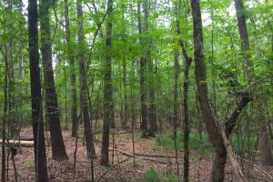 Shivers Green Homesite Tract with Stream - Kershaw County SC