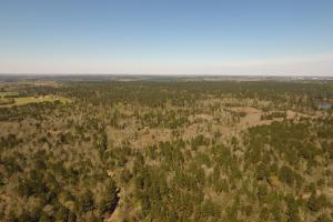 ACREAGE RESIDENTIAL DEVELOPMENT - ADJOINS NATIONAL FOREST in Walker, TX (28 of 31)