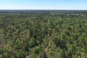 ACREAGE RESIDENTIAL DEVELOPMENT - ADJOINS NATIONAL FOREST in Walker, TX (13 of 31)