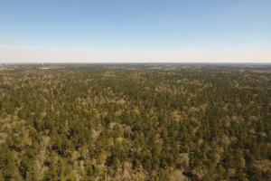 ACREAGE RESIDENTIAL DEVELOPMENT - ADJOINS NATIONAL FOREST in Walker, TX (23 of 31)
