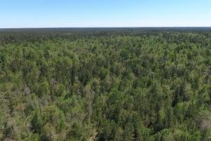 ACREAGE RESIDENTIAL DEVELOPMENT - ADJOINS NATIONAL FOREST in Walker, TX (12 of 31)