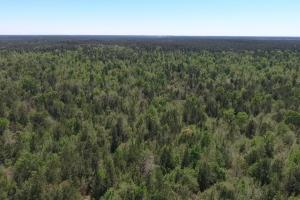 ACREAGE RESIDENTIAL DEVELOPMENT - ADJOINS NATIONAL FOREST in Walker, TX (10 of 31)