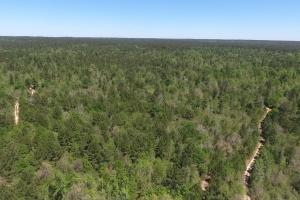 ACREAGE RESIDENTIAL DEVELOPMENT - ADJOINS NATIONAL FOREST in Walker, TX (11 of 31)