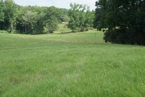 Homesite, Pasture and Timber Investment - Pickens County AL
