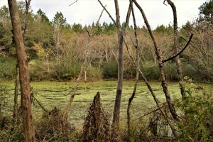 Blackwater Creek Recreation and Timber Investment in Winston, AL (3 of 13)
