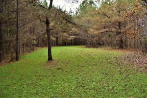 Blackwater Creek Recreation and Timber Investment in Winston, AL (4 of 13)