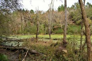Blackwater Creek Recreation and Timber Investment in Winston, AL (8 of 13)