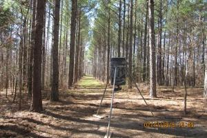 263 Acres of Premier Hunting in Holmes County - Holmes County MS
