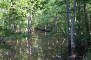 Bogue Chitto Creek Hunting Paradise in Neshoba, MS (21 of 22)